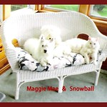 Maggie Mae and Snowball