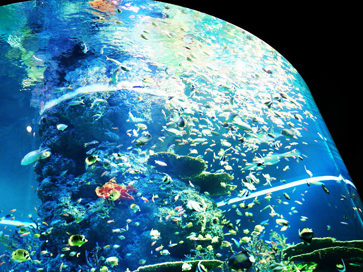 school of fishes S.E.A. Aquarium world's largest aquarium