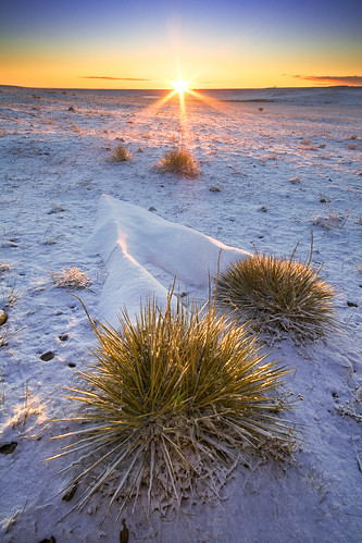 morning blue winter yellow sunrise flora colorado unitedstates boulder sunburst prairie yucca grasslands
