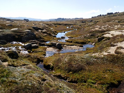Headwaters of Snowy River