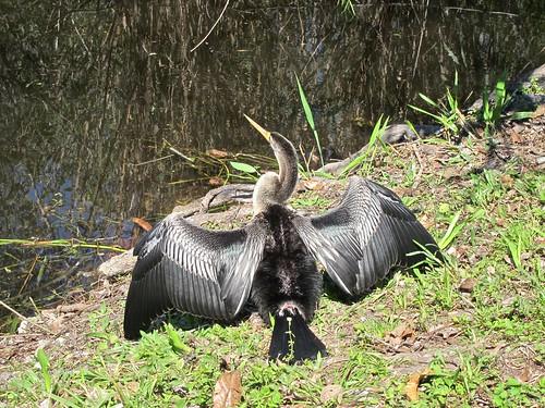EvergladesNP - 10