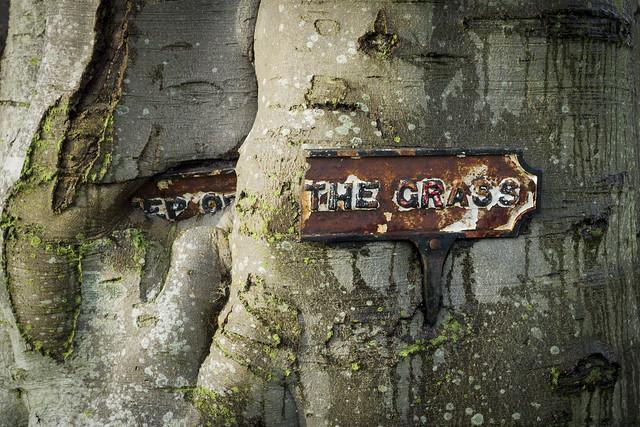 **EP O** THE GRASS