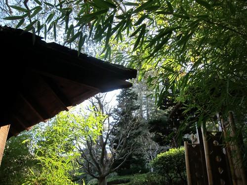 Hakone Japanese Gardens, Saratoga, CA IMG_2345
