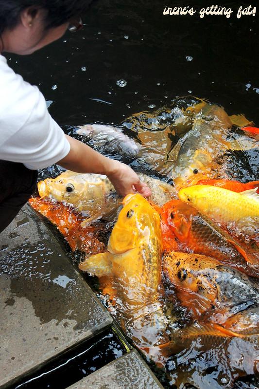goldfish-bupe