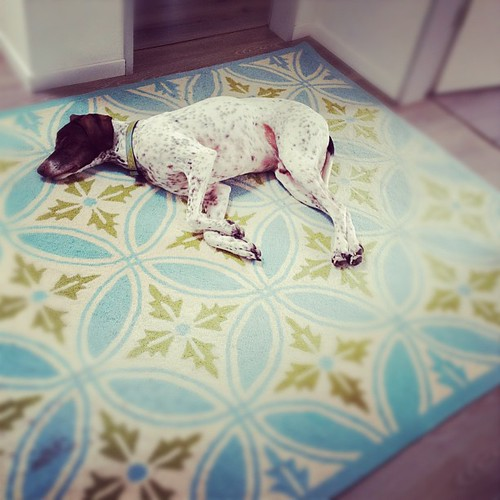 Fell asleep waiting for me :) #germanshorthairpointer #dog #myshadow