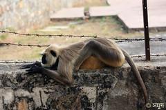holy monkey :D