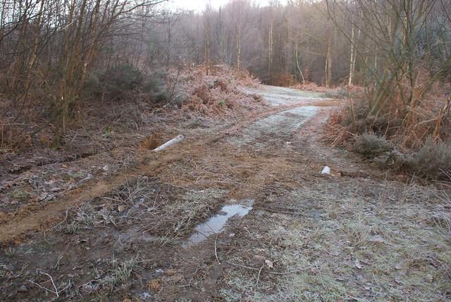 DSC_5521 woodland track