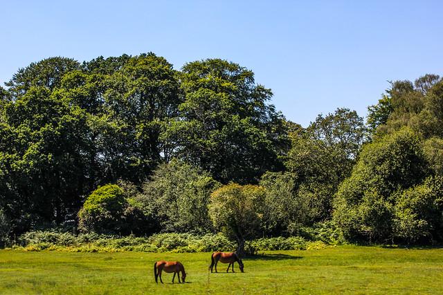 Parque nacional de New Forest