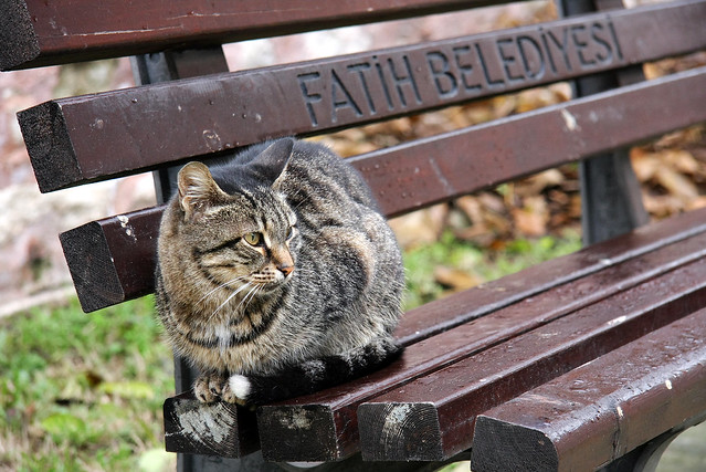 A cat on the bench, Istanbul, Turkey イスタンブールのネコ