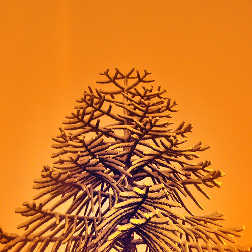 snowy monkey puzzle by pho-Tony