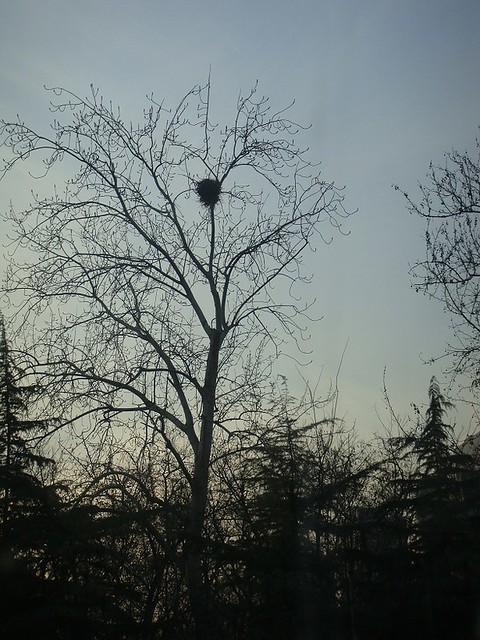 03 北方是树梢的鸟窝