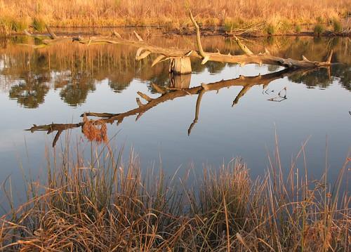 creek northcarolina marsh wetland cumberlandcounty hopemills hopemillslake littlerockfishcreek