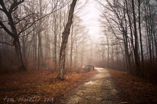 bridge trees leaves fog landscapes newjersey hiking creepy longpond