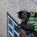 Hallstatt-20120916_2287