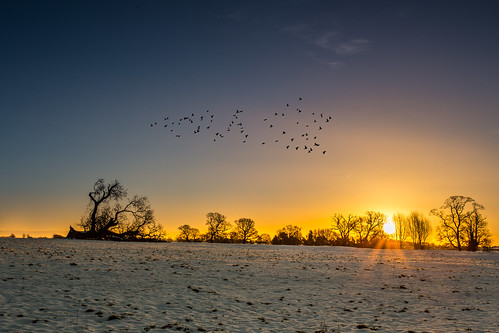 camera light england sky sun snow birds silhouette sunrise landscape other day unitedkingdom calm clear backlit fullframe stevenage hitech starburst 6d canon1740l formatt ultrawideangle gnd danielborg graduatednd littlewymondley 06nd canon6d yahoo:yourpictures=sunrise potd:country=gb