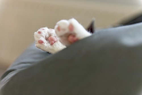 Lazy sunday afternoon - Cat paws by Merlijn Hoek