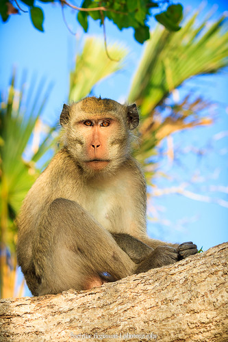 """Monkey Portrait"" by Bachtiar Firgiawan"