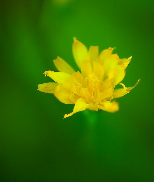 Wildflower 09_0279.jpg