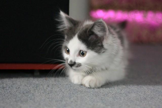 Lucy as a Kitten 2