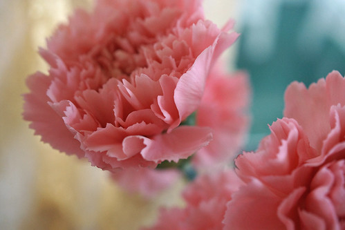 Jelly Bean Carnations
