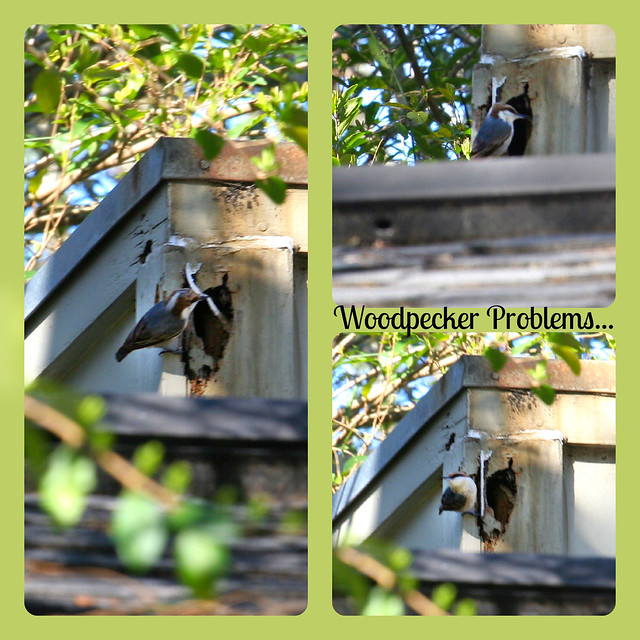 64.365 {Woodpecker Problems}