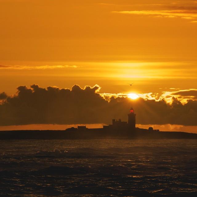 Coquet Island at Dawn