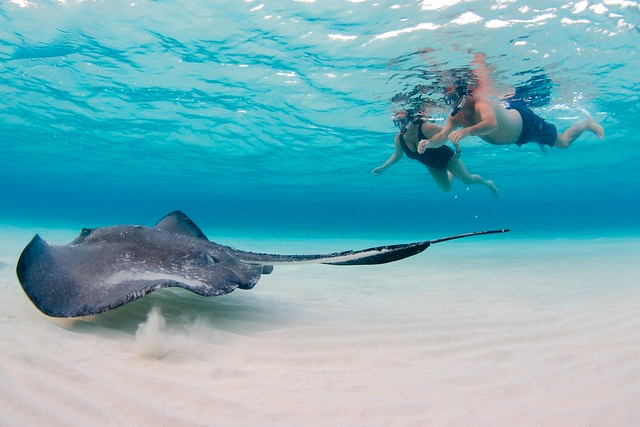 Stingray-Cayman-Sandbar 508