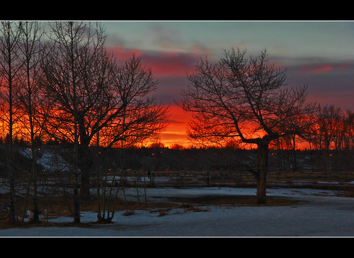 trees winter sunset sky snow clouds canon fire evening twilight shadows dusk branches silhouettes atmosphere davidsmith calgaryalbertacanada eos60d