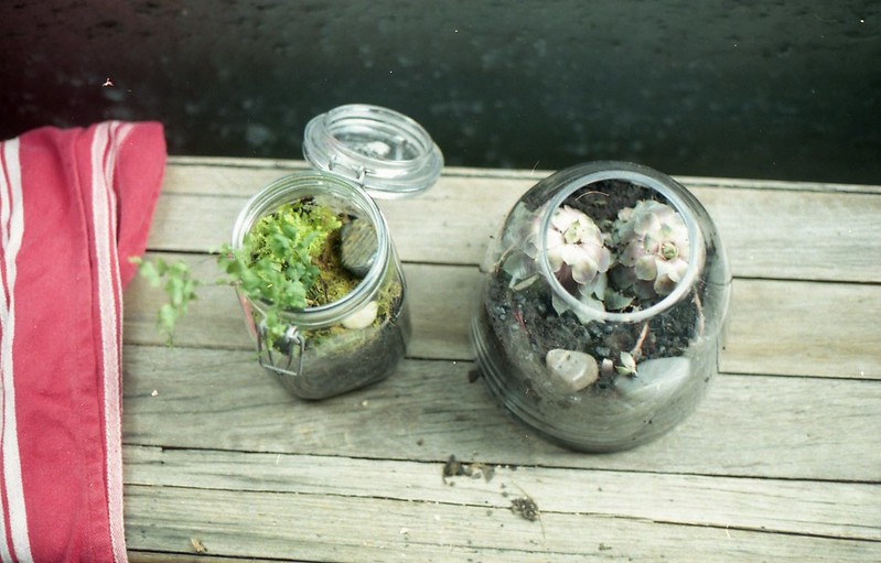 We made a terrarium