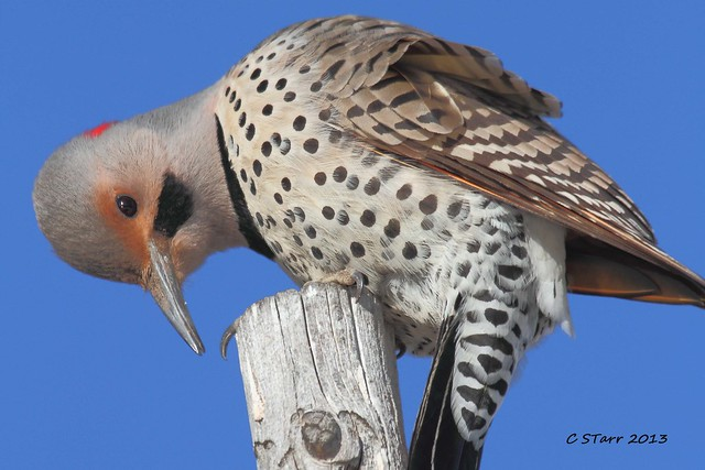 140 norther flicker
