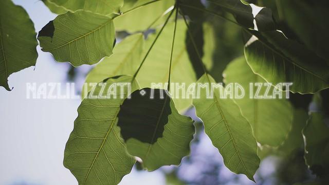 Majlis Perkahwinan :: Izzati + Izzat