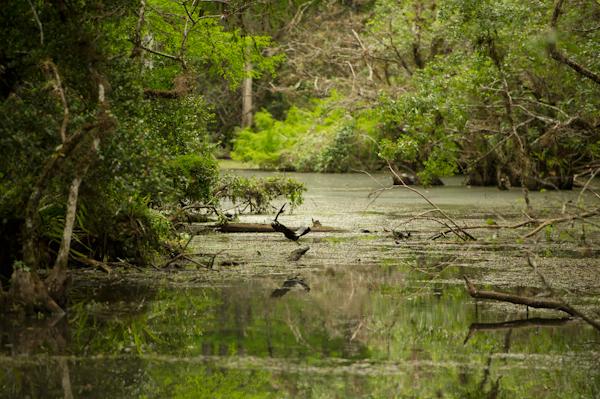 RYALE_Everglades-114