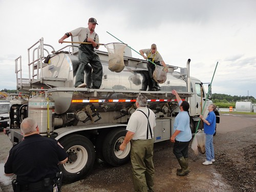 Biologists John Johnston and Carey Edwards unload retired lake from Iron River National Fish Hatchery destined for Lake Superior at Barage Bay