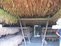 2013-01-cuba-312-vinales-tobacco factory