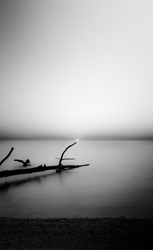 sky blackandwhite white black tree beach water sunrise bay branch chesapeake chesapeakbay blackwhitephotos