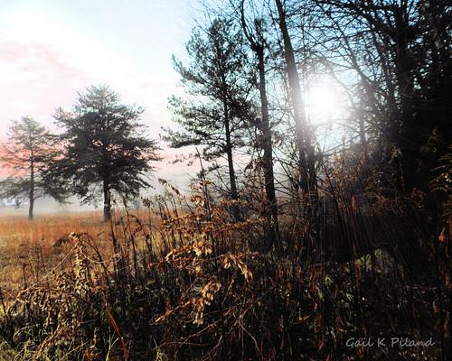light sky landscape photo weeds woods soe thegalaxy flickraward gailpiland ringexcellence rememberthatmomentl1