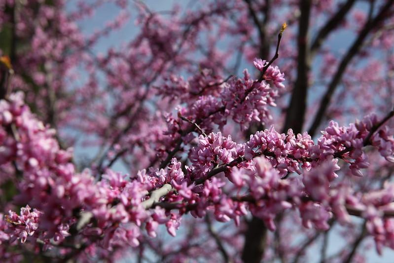 spring flower_036