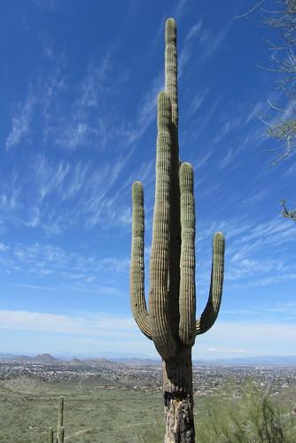 Arizona23