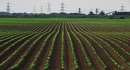 Crops in the Landscape