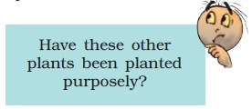 NCERT Class VIII Science Chapter 1 Crop Production and Management