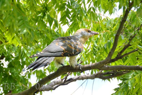 bird_6701