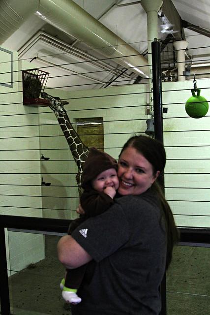 M and Giraffe