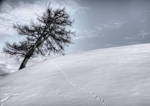 Mi piego ma non mi spezzo. by Davide Comotti