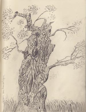 arbre imaginaire RS