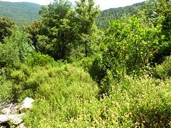 Anciennes bergeries de Lora : le départ du vieux sentier des bergeries de Lora