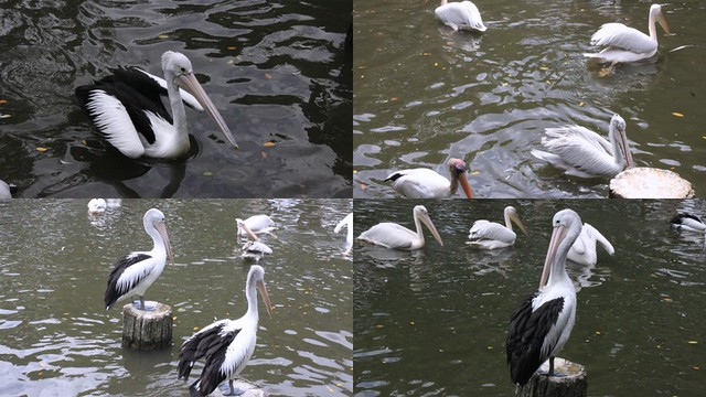 Jurong Bird Park - 29th Jan 20132