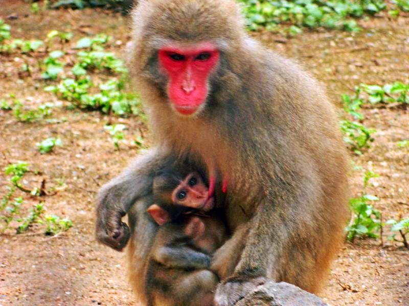 juliana leite zoologico zoo fotos por lucas lopes blog animais selvagens papagaio jacaré macaco amamentando arara girafa 9