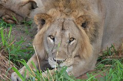 8486193115 f6d413a246 m Bottom line: The Trip was Magnificent. Thomson Safaris Review: Bob D.