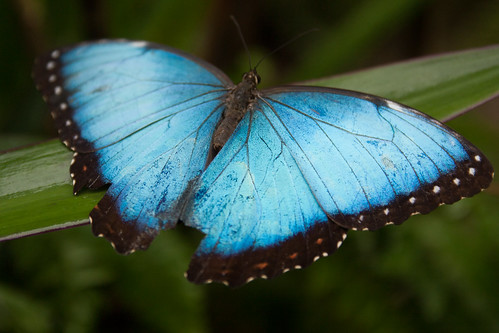 St. Maartin Butterfly Farm