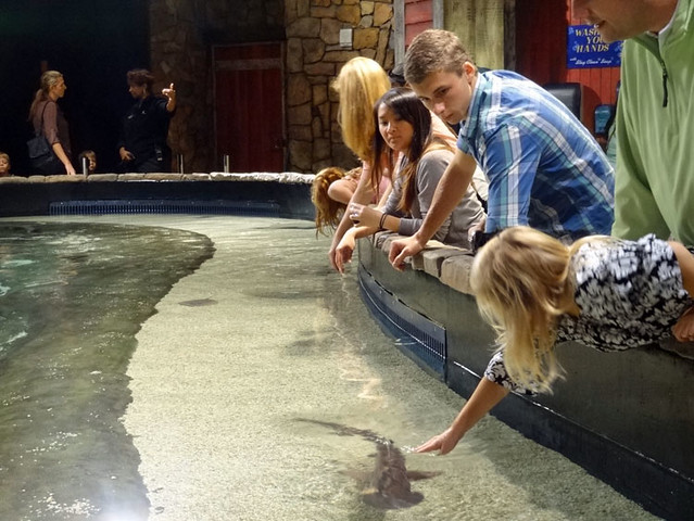 ray-shark-touch-pool